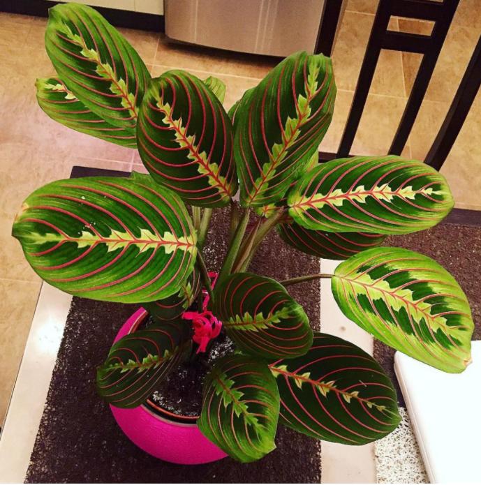 FOTO// Florile fericirii: 10 plante care vor aduce banii și norocul în casa ta